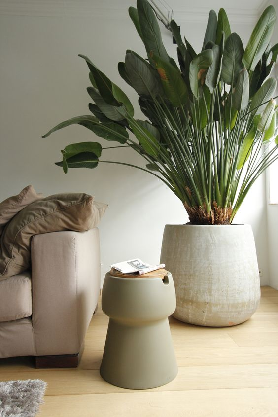 Stunning Grote Plant Woonkamer Pictures - New Home Design 2018 ...